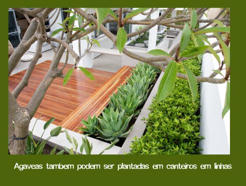agaveas