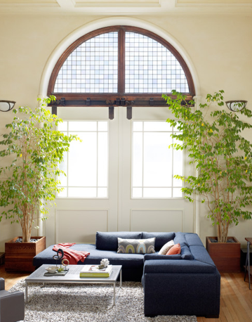 Os ficus são as plantas mais conhecidas para interiores, talvez porque se adaptem facilmente aos ambientes internos.